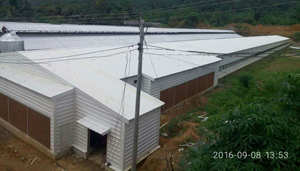 Philippines Broiler Chicken Shed