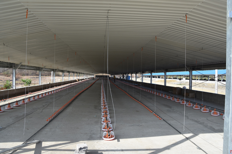 Prefabricated Steel Structure Chicken Broiler House