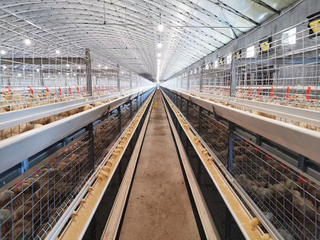 Automatic Poultry Cage for Broiler